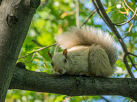 White squirrel on a branch of a tree