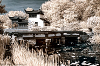Chinese Garden - Infrared  / Jardin de Chine - Infrarouge